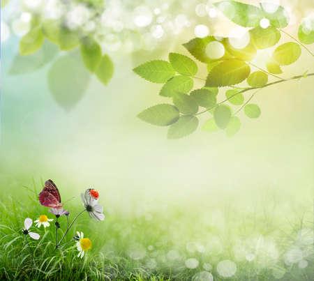 jardines con flores: Fondo de primavera con flores y mariquita Foto de archivo