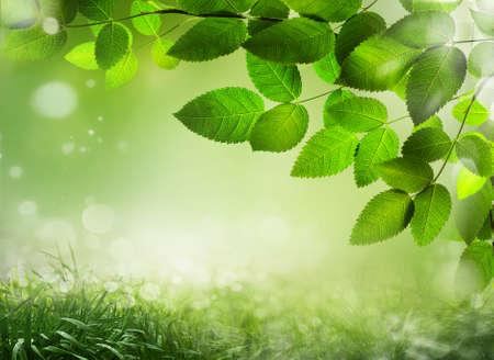 defocus: Abstract spring background with grass Defocus