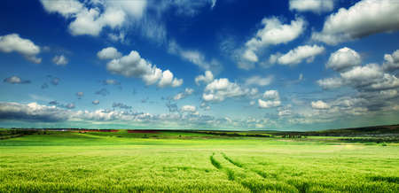 cielo azul: Prado verde en la montaña. Composición de la naturaleza. Foto de archivo