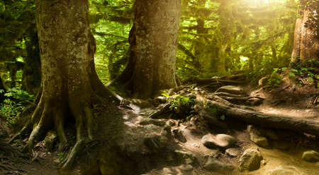 mystery: fantastically beautiful, mysterious, fairy-tale forest