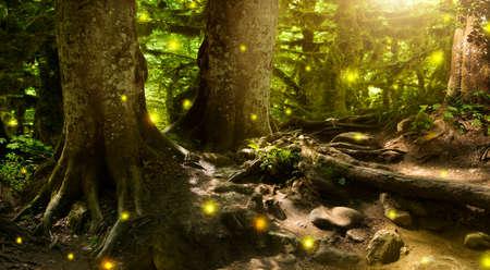 Muy hermoso, misterioso bosque, cuento de hadas Foto de archivo - 52574699