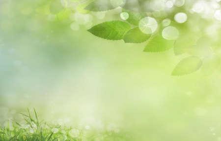 defocus: Spring background  de-focus
