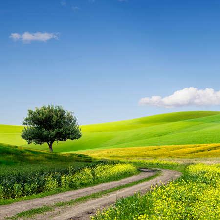백그라운드에서 환상적인 구름과 녹색 잔디 필드 풍경