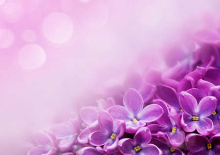 flowers bokeh: Macro image of spring lilac violet flowers, abstract soft floral background