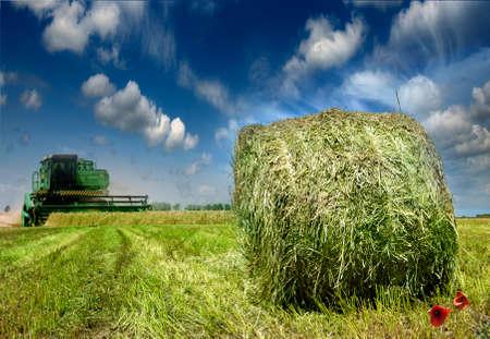 feedstock: Farmers field full of hay bales