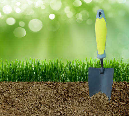 grass plot: Growing grass in the earth soil