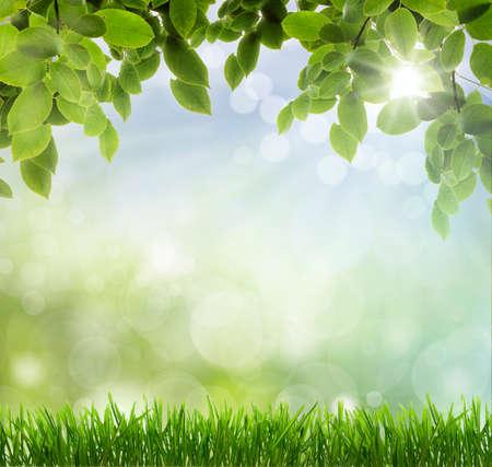 spring: background Stock Photo