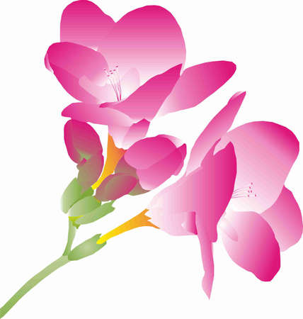 stamen: branch with pink flowers freesia
