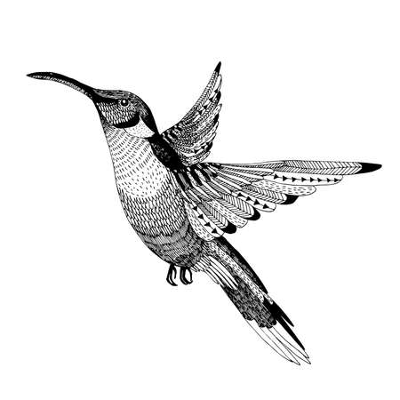 ink illustration: hand drawn abstract flying colibri in a unique style isolated on a white background