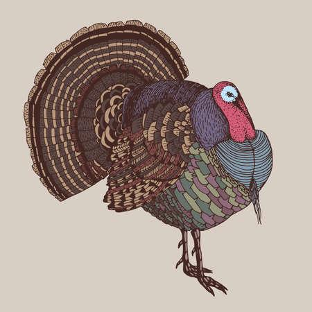 turkey: abstracto dibujado a mano ilustración vectorial con un colorido pavo Vectores