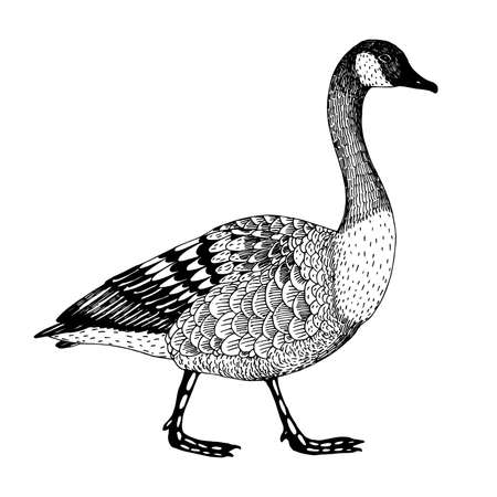 goose: abstract hand drawn vector illustration with a goose isolated on a white background