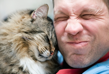 affection: Striped cat care with man