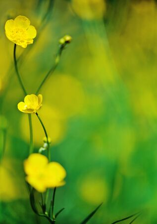 Yellow wild flowers Stock Photo - 14118043