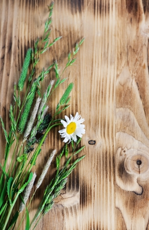Herbs and camomile on the wood background photo