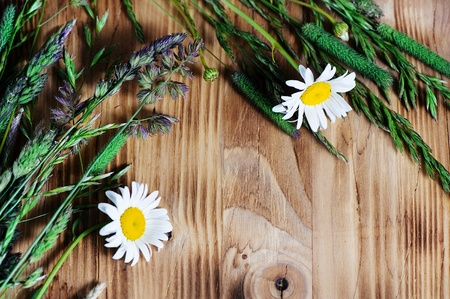 Herbs and camomile on the wood background Stock Photo - 14118057