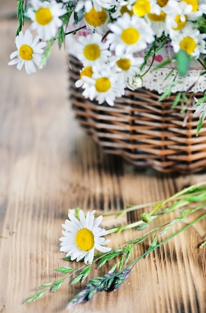 Herbs and camomile in the basket  photo