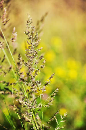 Summer meadow background Stock Photo - 14554539