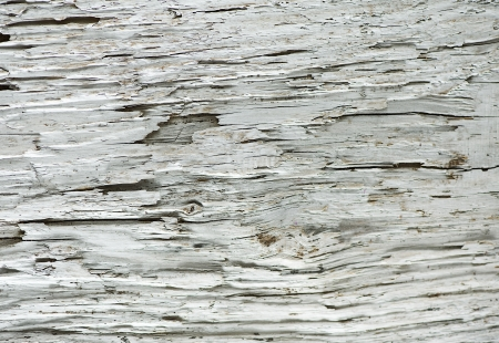 Old wood texture Stock Photo - 14780954