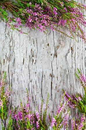 Heather on the old wood background Stock Photo - 14780955