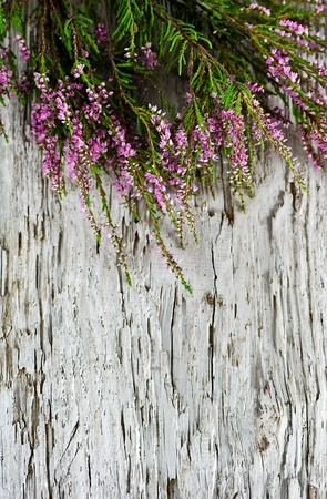Heather on the old wood background photo