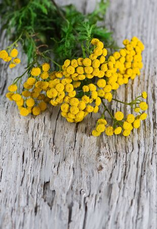 Bouquet of  tansy on the wooden background Stock Photo - 14893351