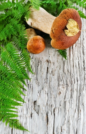 Autumn background  mushroom and fern  photo