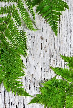Fern leaves on the old wooden background photo