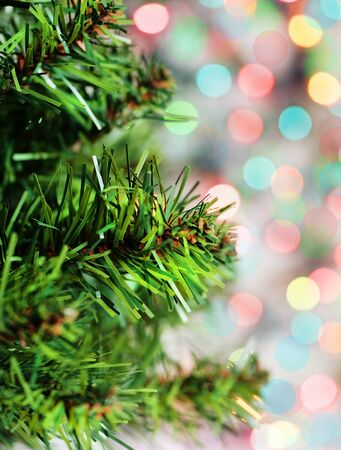 diffused: Branch of green fir tree on the shiny background