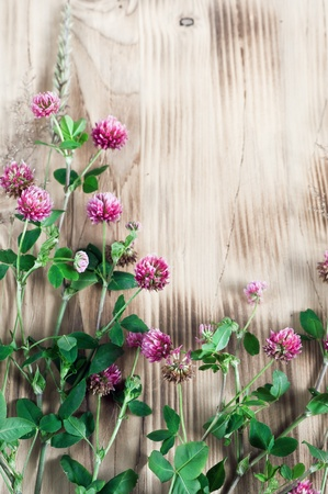 Clover and herbs on the wooden background Stock Photo - 19104886