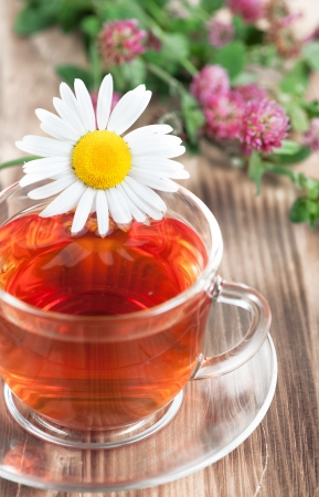 Herbal tea with chamomile and clover on the wood background Stock Photo - 19159179
