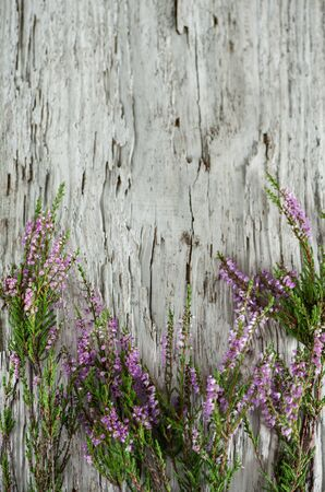 Branches of  heather on the old wooden background Stock Photo - 19270371