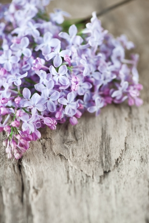 Lilac flowers branch on the old wooden background photo