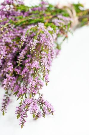 Bouquet of heather on the white background Zdjęcie Seryjne