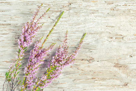 Branches of heather on the old wooden background photo