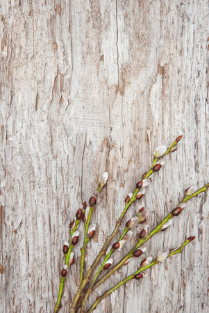 Easter decoration with catkins on old wood background photo