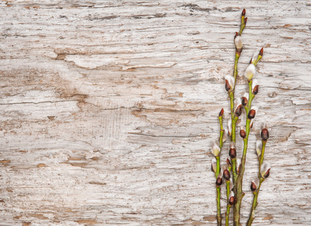 catkins: Easter decoration with catkins on old wood background Stock Photo