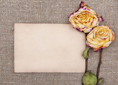 Dry roses and old paper on the burlap textile  photo