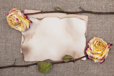 Dry roses and aged paper on the burlap textile  Stock Photo - 27484891