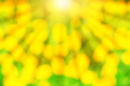 Abstract summer green and yellow background with bokeh and sunlight photo