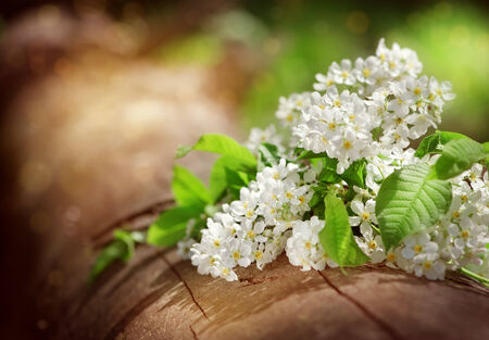 Bouquet of white spring flowers on the old log photo