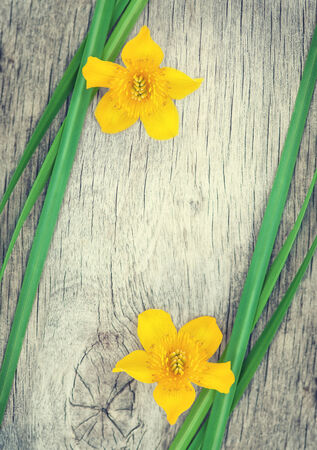 Yellow flower and green grass on the old rustic wood  photo