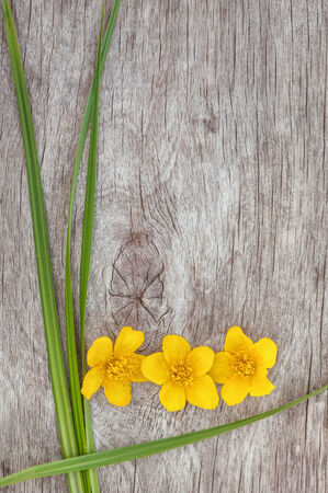 Yellow flower and green grass on the old rustic wood background photo