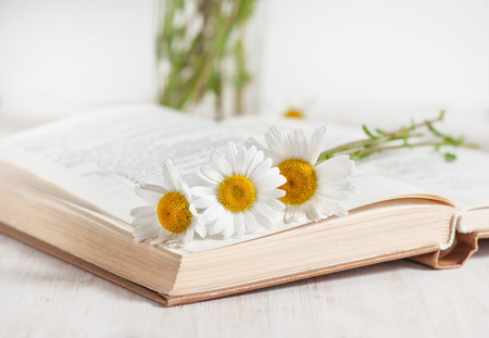 Fresh chamomile flowers in open book on the white wooden table  版權商用圖片
