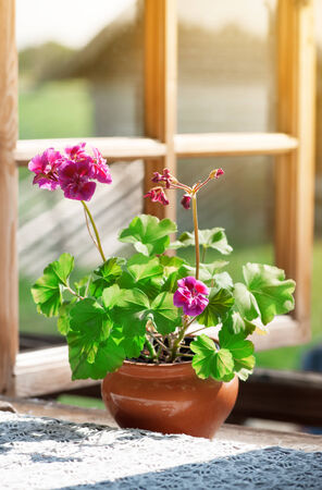Vase with a geranium flower on the rural windowsill photo