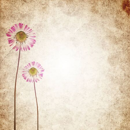 Old vintage paper texture background with dry flowers. Vector