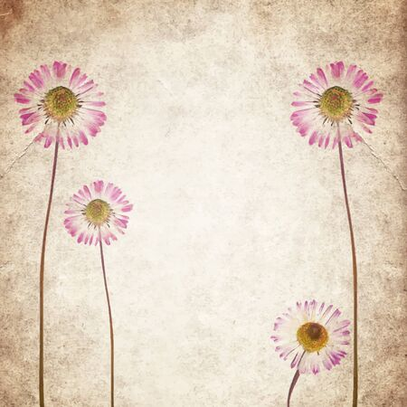 dry flowers: Old vintage paper texture background with dry flowers.  Illustration