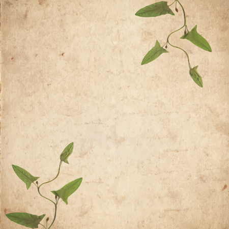 dry grass: Old vintage paper texture with green dry grass leaves. EPS10 vector illustration Illustration