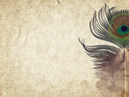 Old vintage paper texture background with peacock feather Foto de archivo