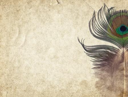pavo real: Fondo vintage textura de papel viejo con la pluma de pavo real