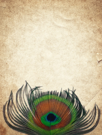 Old vintage paper texture background with peacock feather photo